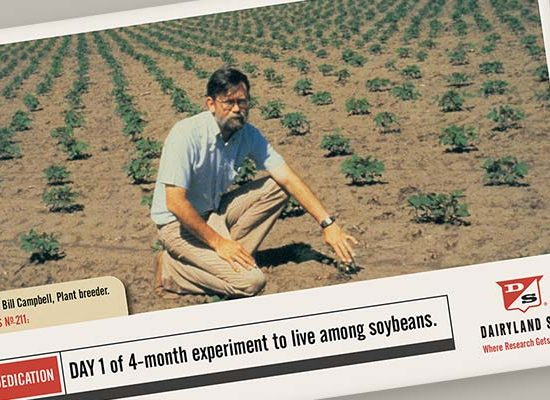 Dairyland Seed